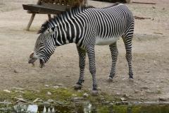 Zoo 2017 (3)