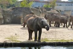 Zoo 2017 (5)